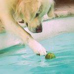 piscine-chien